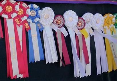 rosettes concours Ontario