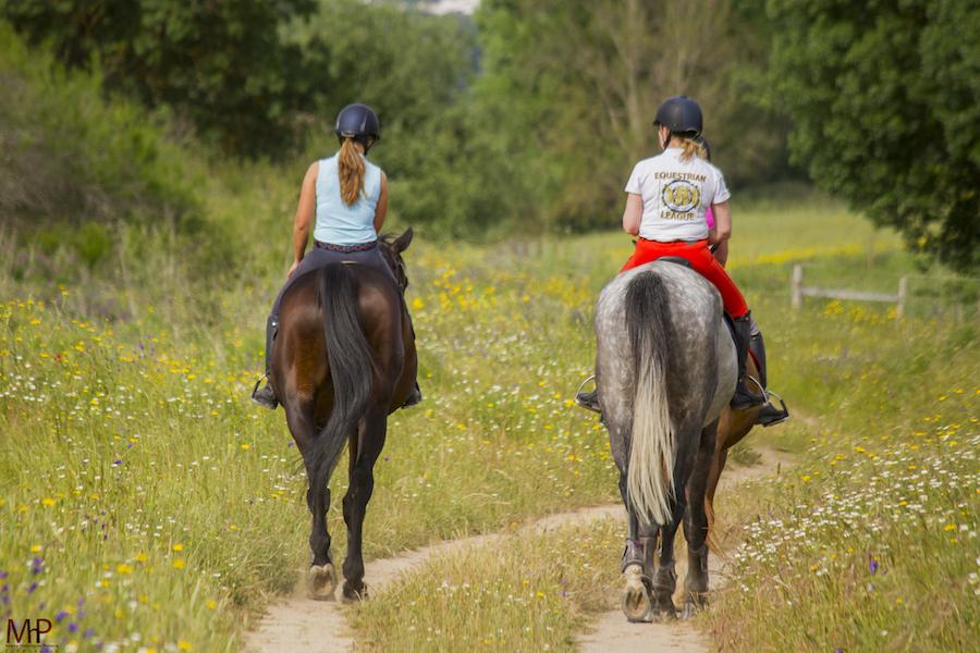 Le cheval à l'arrivée du printemps !