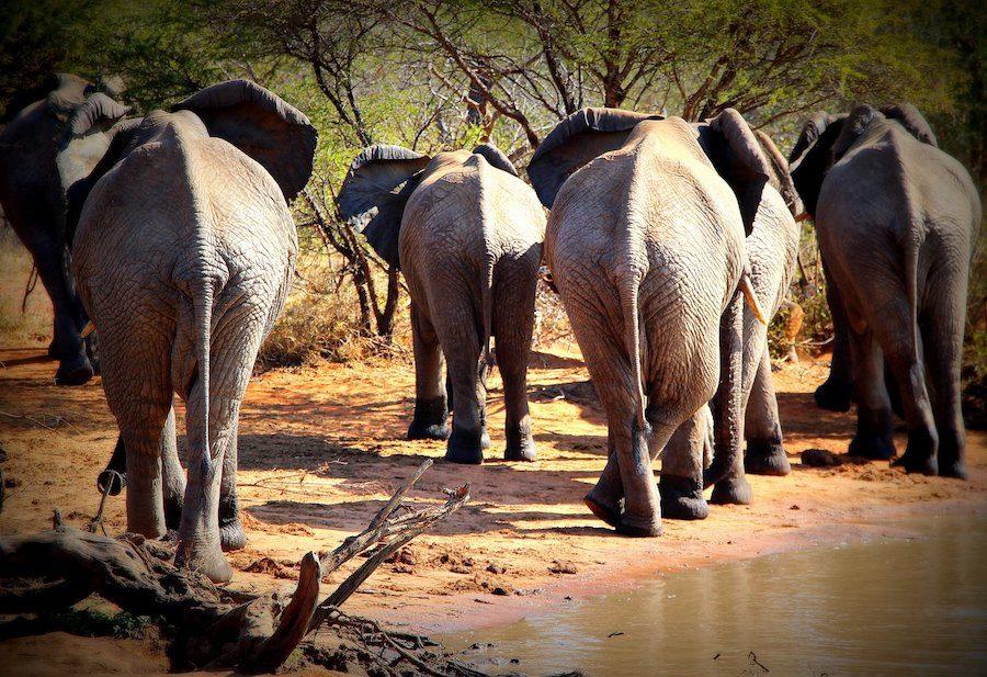 éléphants afrique du sud safari cheval