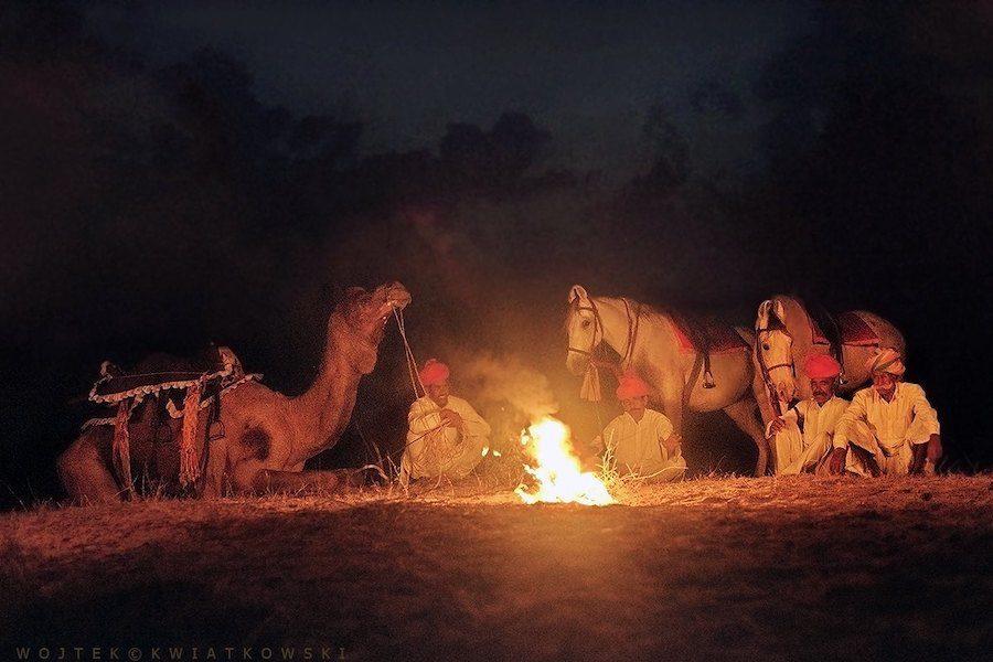 feu chameau Marwari cheval inde