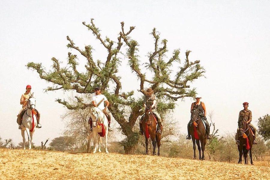 cavaliers Marwari Rajasthan Inde