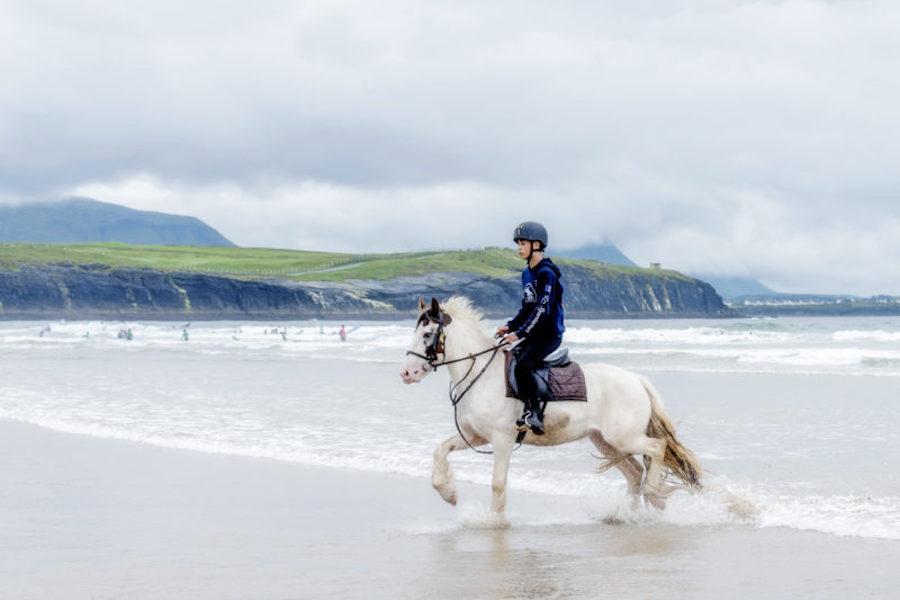 Irish Cob cheval plage Donegal trot