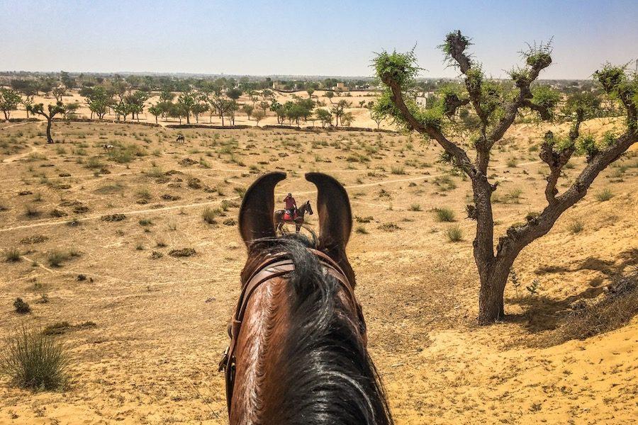 Cheval oreilles Marwari Inde Rajasthan