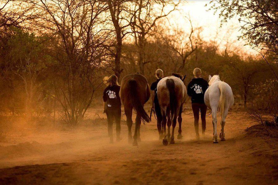 chevaux afrique safari