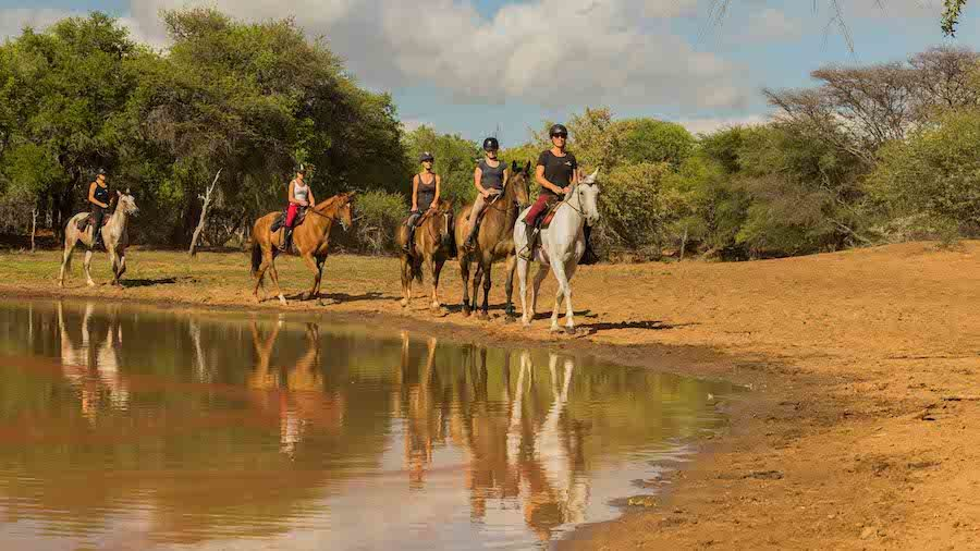 safari cheval kruger afrique du sud
