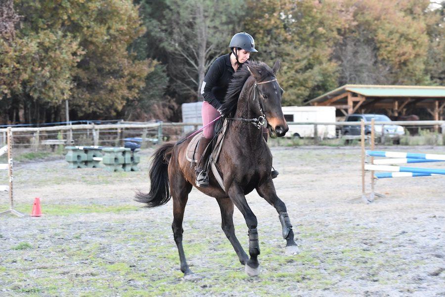 changement de pied dressage équitation Landes