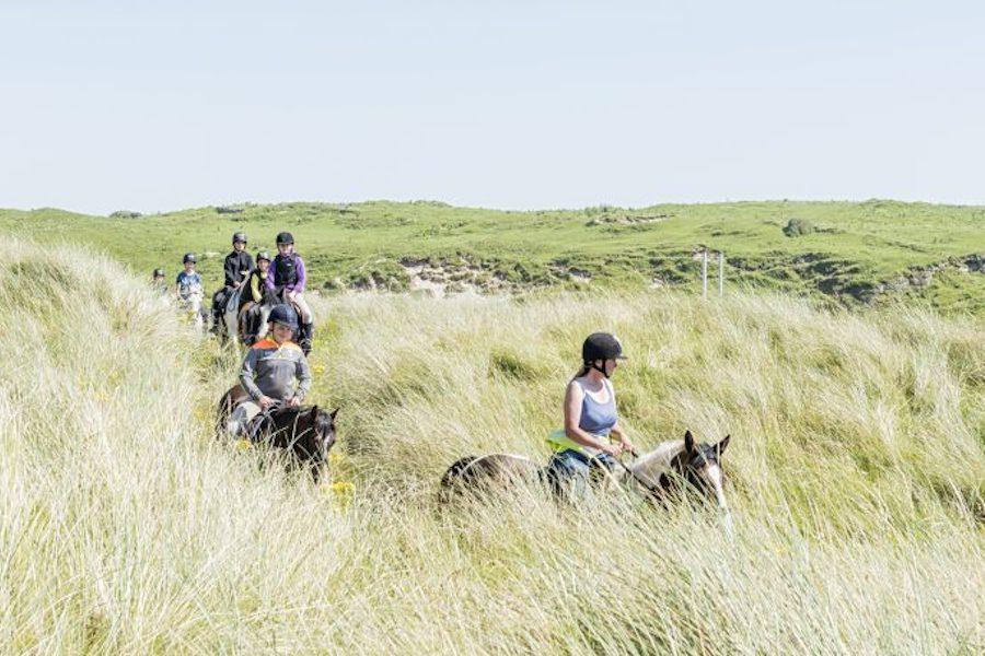 chevaux dunes Donegal Irlande