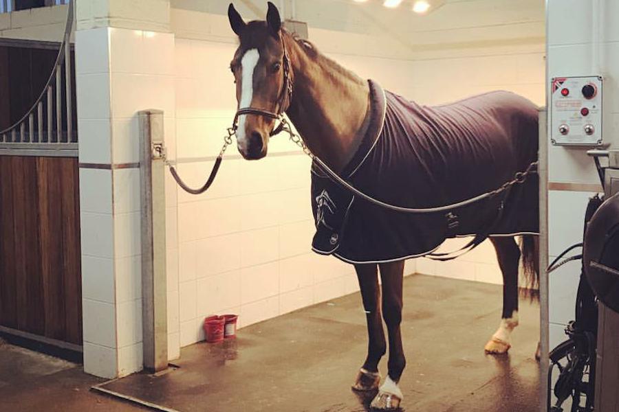 cheval CSO solarium