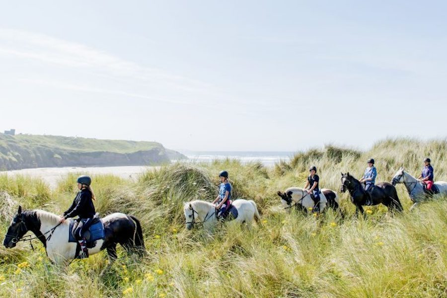 chevaux dunes Donegal