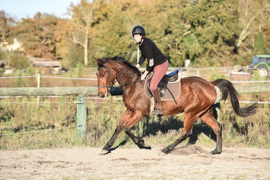 saut d'obstacles stage équitation Landes