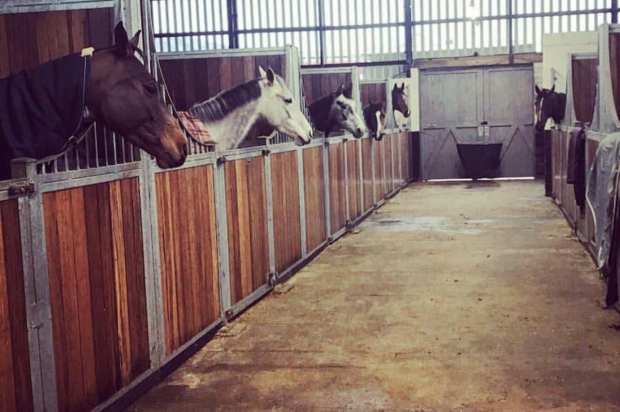 ecuries chevaux
