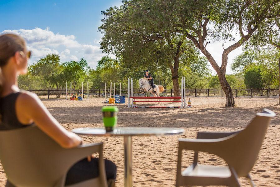 jumping obstacles afrique safari équitation