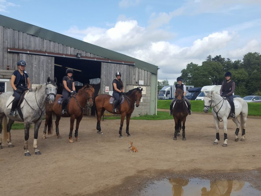 Stagiaire dressage Angleterre